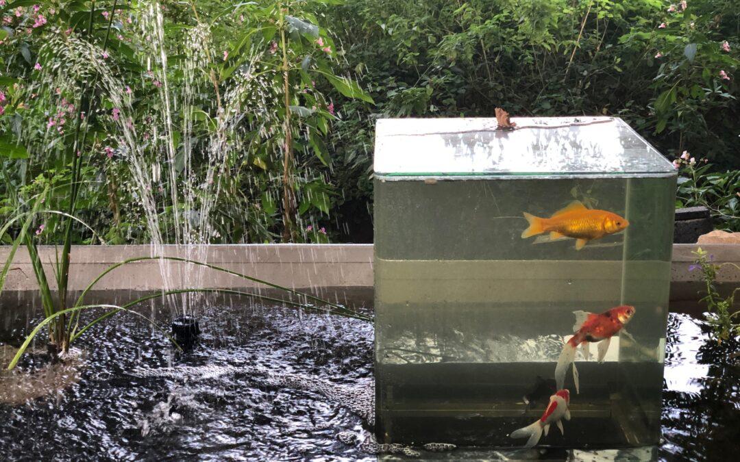 Goldfische mit Weitblick